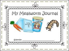 Meal Worm Journal and experiments!