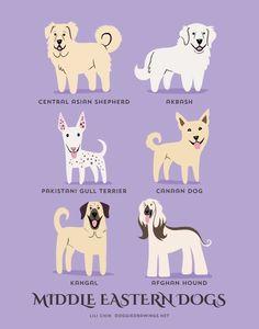 From CENTRAL & WESTERN ASIA: Akbash/Anatolian Shepherd (Turkey), Central Asian Shepherd, Pakistani Gull Terrier, Canaan Dog (Israel), Kangal (Turkey), Afghan Hound (Afghanistan).