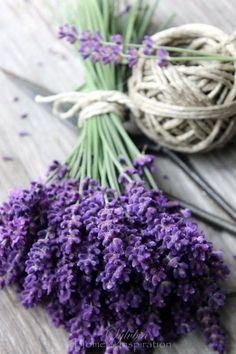 Couleur violet- mauve- lavande - Astréor Lavender aids sleep and relaxation. It is also beneficial i Lavender Cottage, Lavender Blue, Lavender Fields, Lavender Flowers, Purple Flowers, Beautiful Flowers, Lavender Bouquet, French Lavender, Twine Flowers