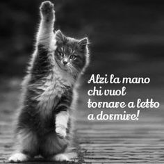 The Feline State has grown too large and powerful. Good Morning Good Night, Day For Night, Animals And Pets, Funny Animals, Cute Animals, Italian Memes, Italian Language, Horror Stories, Funny Moments