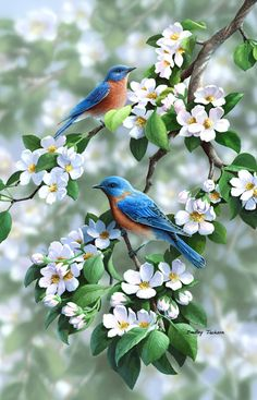 Orchard Blues by Bradley Jackson ~ bluebirds & apple blossoms