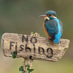 """Kingfisher on Sign"" Dean Mason."