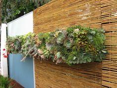 um jardim vertical