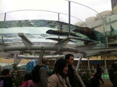 Sunshine Aquarium: Seal tank