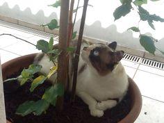 Amoreira + gatinha