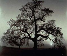 Ansel Adams Photo