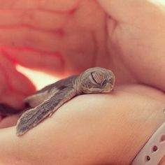 OMG! I want to hold it<3