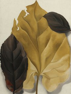 Hand painted reproduction of Brown and Tan Leaves This masterpiece was painted originally by Georgia O'Keeffe. Museum quality handmade oil painting reproduction oil painting on canvas. Georgia O'keeffe, Georgia O Keeffe Paintings, Alfred Stieglitz, New York Art, Wow Art, Lake George, Oil Painting Reproductions, Art Institute Of Chicago, Pablo Picasso