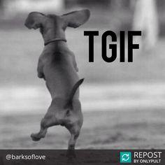 TGIF! Let's boogie! #tgif #adopt #adoptadog #adoptdontshop #dogadoption #barksoflove #dogrescue #foster #fosterdog #dogfoster #savealife #dog #instadog #instapet #instapup #dogloversofinstagram #dogdaily #doglove #aplacetolovedogs #dogoftheday #dogsofinstagram #orangecounty #socal #fullerton #nonprofit