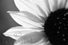 black and white nature printable - Yahoo Canada Image Search Results