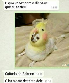 Memes Humor, Sao Memes, Funny Memes, Why God Why, Turn Down For What, Dark Jokes, America Memes, Like Animals, Try Not To Laugh