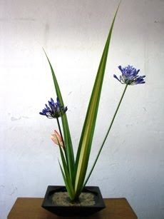 Ikebana Ikenobo, o Caminho das Flores The Way of Flowers