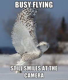 (owl) busy flying..still smiles at the camera