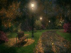 Autumn night - green, black, tree, autumn, night, rain, light, park, red, nature, bank