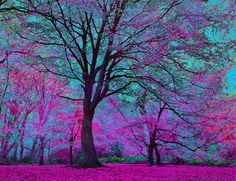 Rp anyone. I was sitting under this tree when two other fangirls come, and my purple Dragon luna is sleeping by my side Image Nature, All Nature, Amazing Nature, Beautiful World, Beautiful Images, Magical Forest, Shades Of Purple, Beautiful Landscapes, Mother Nature