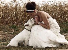 Westie wedding picture
