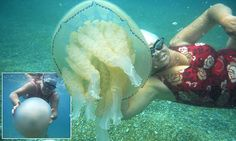 It's a jelfie! Daring moment swimmer poses for a selfie with a stinging jellyfish while swimming off Dorset coast    Read more: http://www.dailymail.co.uk/news/article-3102373/It-s-jelfie-Daring-moment-swimmer-poses-selfie-stinging-jellyfish-swimming-Dorset-coast.html#ixzz3bmNoSuI5  Follow us: @MailOnline on Twitter   DailyMail on Facebook