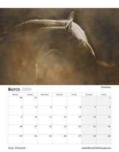 Tony O Connor 2020 Equine Art Calendar Limited Edition Art Calendar, Equine Art, Life Is Good, Sketches, Image, Beautiful, Store, Artist, Tent
