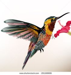 Vector illustration with realistic humming bird for design - stock vector