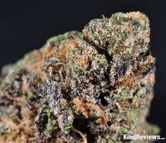 This sample was definitely dark, with olive greens, dark but muted purple, and sparse orange pistils.  What was really noticeable immediately was how dense the buds were — they were like rocks, barely giving when squeezed and requiring some elbow grease in the grinder.  Despite that, they were nicely dried and seemed to have a quality cure, with quite the collection of milky white trichomes as well as some ambers and clears.  We saw a tiny seed or two, but it was nothing that affected the…