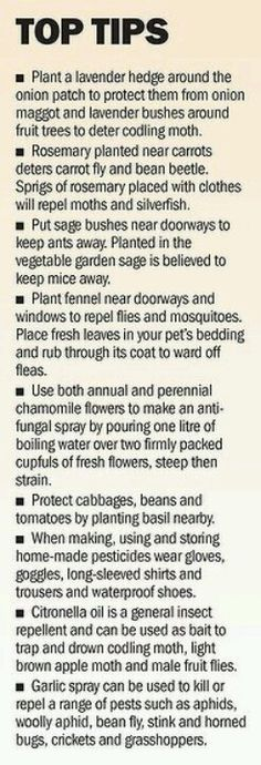 Top tips good ideas for companion planting for bug control!