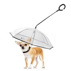 LESYPET Dog Umbrella - Adjustable Pet Dog Umbrella with Leash for Small Pets (Upgraded Flexible Handle). Creativity & Practicability Dog Umbrella : Different from normal raincoats, the PE umbrella fabric will cover your pet perfectly from rain or snow. Dog Harness, Dog Leash, Large Dogs, Small Dogs, Cool Pets, Cute Dogs, Dog Umbrella, Dog Raincoat, Best Dog Training