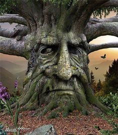 The Celts saw a face on each and every tree, and believed that souls or spirits lived inside of them, the reason why they worshiped them.~