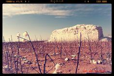 Lubbock Texas Cotton Crop Module Harvest KJ11606 by Dallas Photographer David Kozlowski, via Flickr