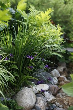 Trail to my garden-rock border lined with pampas grass and flowering shrubs Garden Inspiration, Plants, Beautiful Gardens, Shrubs, Flowering Shrubs, Rock Garden, Backyard Landscaping, Woodland Garden, Garden Rock Border