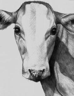 Pencil Drawing of a Cow Head | FARM~cows | Pinterest | Cow ...