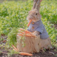 PuiPui as Peter Rabbit? Cute Baby Bunnies, Funny Bunnies, Cute Babies, Cute Bunny Pictures, Animal Pictures, Cute Little Animals, Cute Funny Animals, Tier Fotos, Peter Rabbit