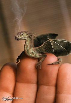Drachen gibt es doch!
