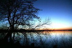 Landscape, Lake, Nature, Tree, Trees