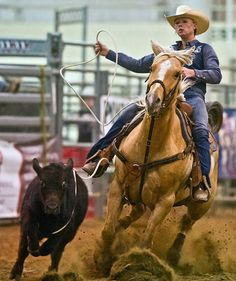 In this Thursday, April 19, 2012, photo, cowgirl Bobbi Grann ropes a calf during the breakaway event at the UNL Rodeo at the Lancaster Event Center in Lincoln, Neb. (AP Photo/The Journal-Star, Kristin Streff)