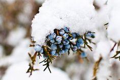 For my Board : Winter Garden