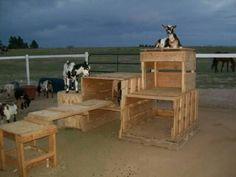 Our goatie playground! - The Goat Spot - Goat Forum Totally doable with the pallets at the ranch currently.Troll Haven farm and wedding venue, Sequim WA Keeping Goats, Raising Goats, Goat Playground, Natural Playground, Playground Ideas, Miniature Goats, Goat Shed, Goat Shelter, Goat Care