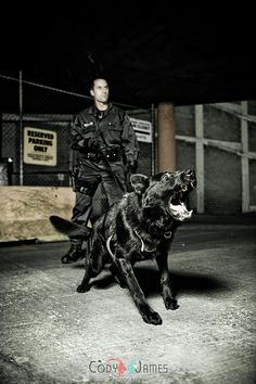 police K9 bite work - Google Search