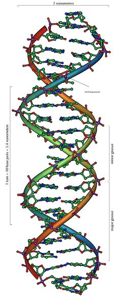 DNA - The basics. Simple but profound.