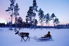 Northern Lights Trips : Lapland Igloo Village and Aurora Holiday Lappland, Finland Destinations, Northern Lights Trips, Holland, Polo Norte, Finland Travel, Lapland Finland, Winter Activities, Free Travel