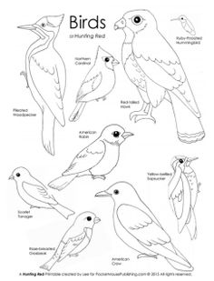 Bird Beak Activity using various tools to act like bird beaks A
