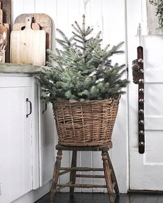 Here are best Small Christmas Trees Ideas for your Christmas home decor. These Mini Christmas Trees are ideal for table top decor or centerpiece or kitchens Small Christmas Trees, Natural Christmas, Simple Christmas, Christmas Home, Christmas Holidays, Christmas Crafts, Indoor Christmas Lights, Christmas Swags, Cheap Christmas