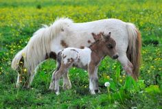 mini horse and her baby! so cute