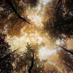 Vertigo: By Alain Baumgarten, more artworks https://www.artlimited.net/al-baum #Photography #Digital #Nature #Vegetal #Tree