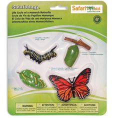 The beautiful Monarch Butterfly undergoes one of the most extensive changes in all of nature. Miraculous and awe-inspiring transformations can be observed and explored in close detail with Safariology