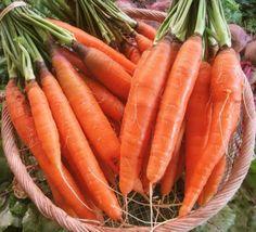 ΕΞΑΓΓΕΛΟΣ: Αυτές είναι οι 10 τροφές που φοβάται ο καρκίνος! Carrots, Vegetables, Food, Essen, Carrot, Vegetable Recipes, Meals, Yemek, Veggies