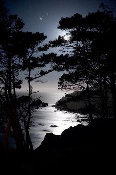 #moon peeking through tree silhouettes over water.