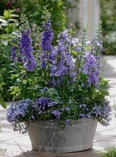 Container Gardening 1 #ContainerGarden #ContainerGarden