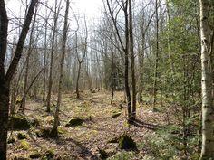 vermont forest in spring