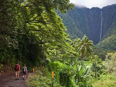 Along Hawaii's Hamakua Coast, visitors will find lush jungles, waterfalls and stunning views of the Pacific Ocean.