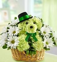 Lucky™ a-DOG-able for St. Patrick's Day (item# ~ puppy floral arrangement of lime green carnations finished off with a green bow & top hat and framed in a basket of daisies Green Carnation, 800 Flowers, Green Flowers, Love Flowers, Beautiful Flowers, Deco Floral, Arte Floral, Floral Design, Unique Flower Arrangements